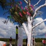 Revival pour l'arbre que l'on croyait mort